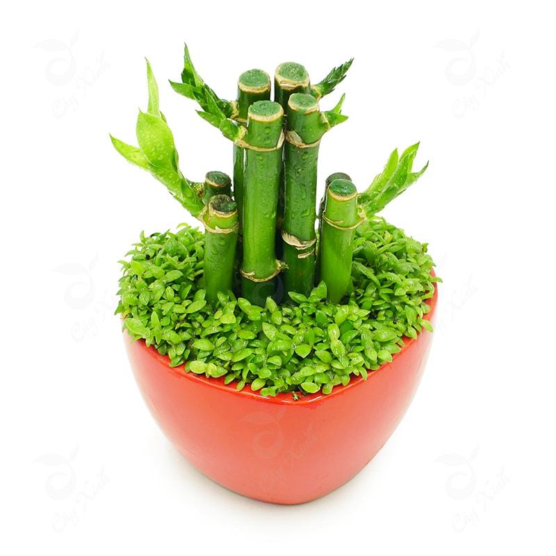 Đặt cây xanh trong phòng làm việc